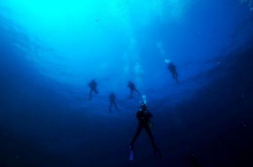 Ckc Divers Dal�� Merkezi