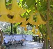Taş Ev Gümüşlük Cafe Restaurant