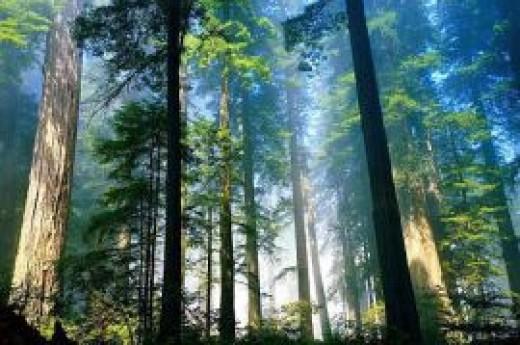 Yenice Ormanlar�