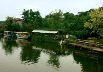 Papatya Kır Bahçesi Ağva