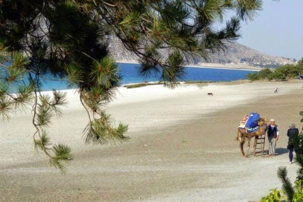 Salda Orman Plaj�