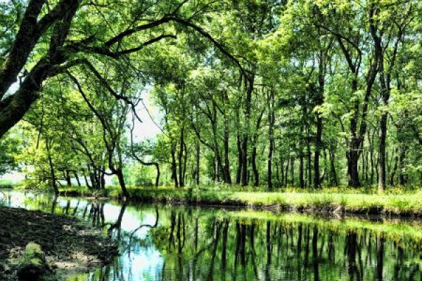 ��neada Ormanlar�