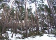 Akdağmadeni Ormanları