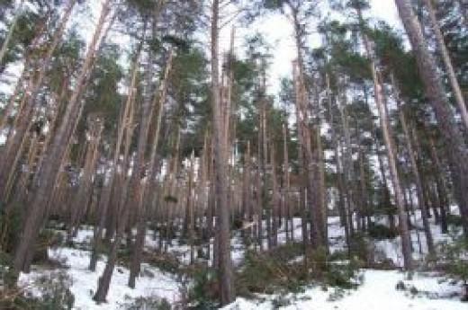 Akda�madeni Ormanlar�