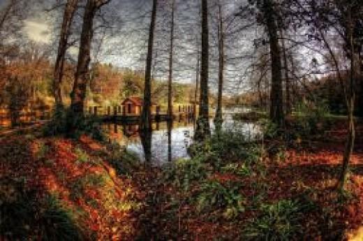 Atat�rk Arboretumu