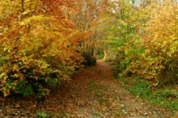 Polonezk�y Tabiat Park�