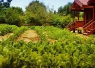 Derin Bahçe Restaurant Bungalow