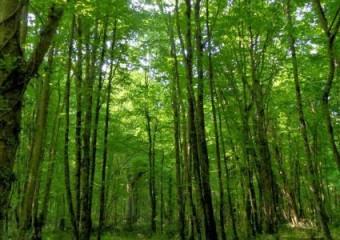 Bulanık Meşe Ormanı