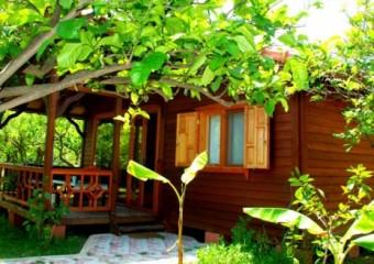 Baraka Houses