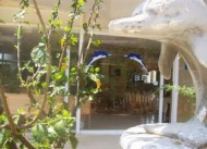 Delfin Hotel Gazipa�a