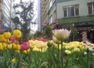 Otel Sultan