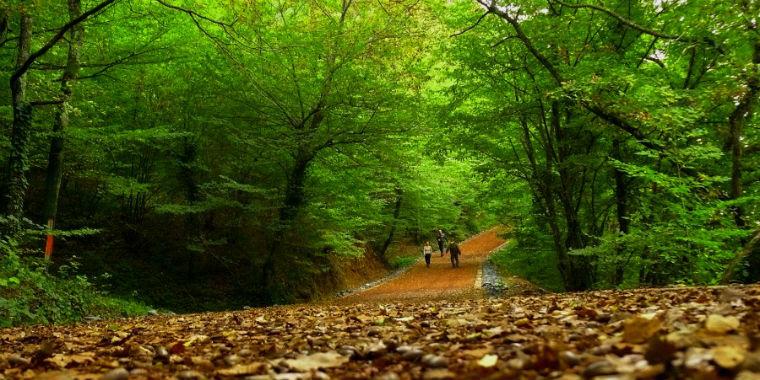 belgrad orman� yap�lacak �eyler