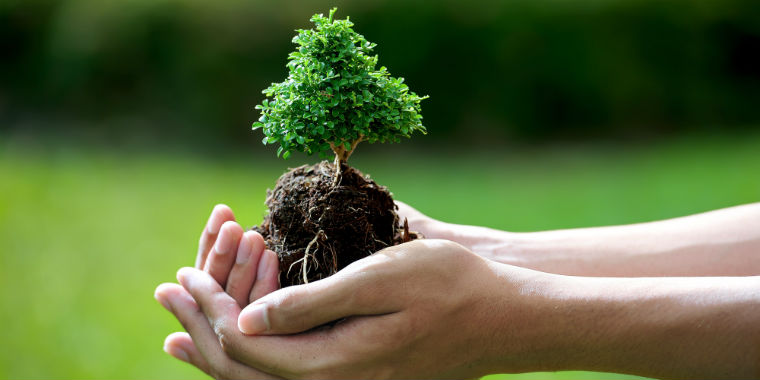 �zel bitki tohumlar�