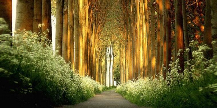 ağaç tüneller