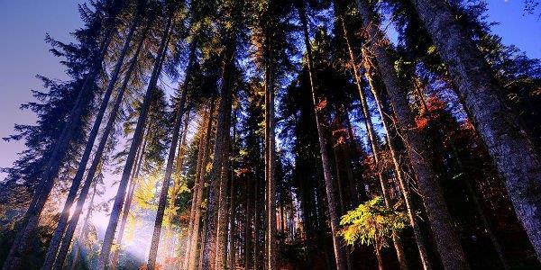 yenice ormanlari kent ormani