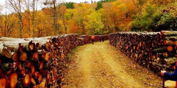 yenice ormanlari yolu