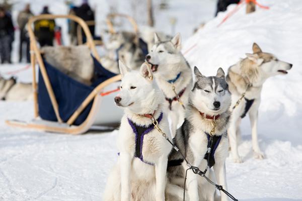 Lapland Back-Up